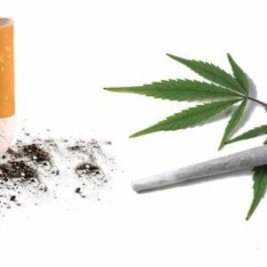Smoking Marijuana vs Tobacco