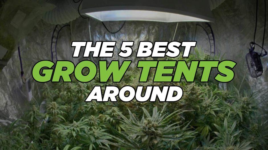 The 5 Best Grow Tents Around